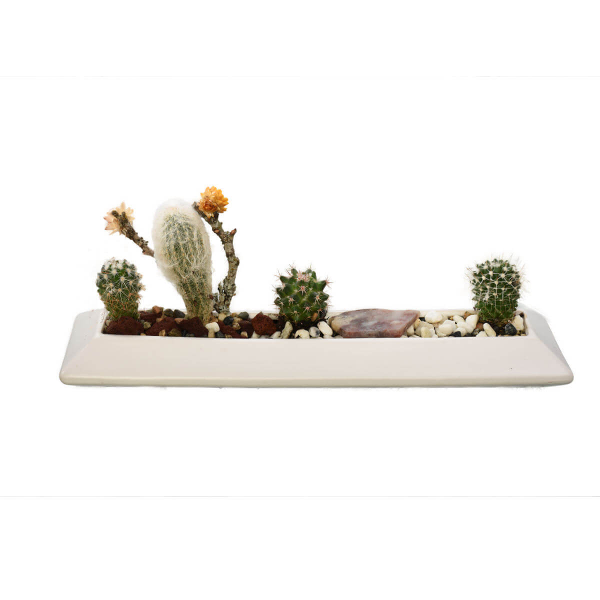 Vancouver Indoor Tropical and Cacti Garden for your desk |  Adele Rae Plant Store