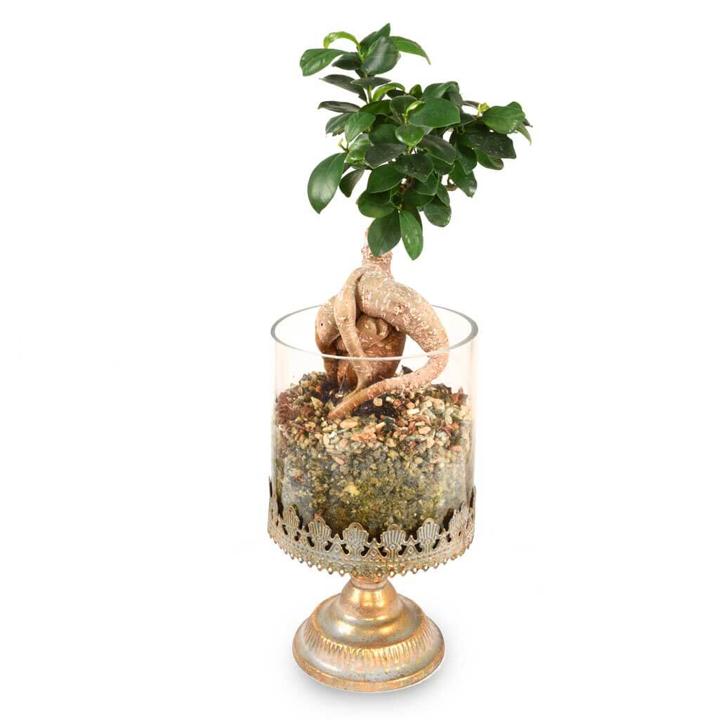 Bonsai Tree Burnaby & Vancouver Delivery - Adele Rae Florist & Plant Shop