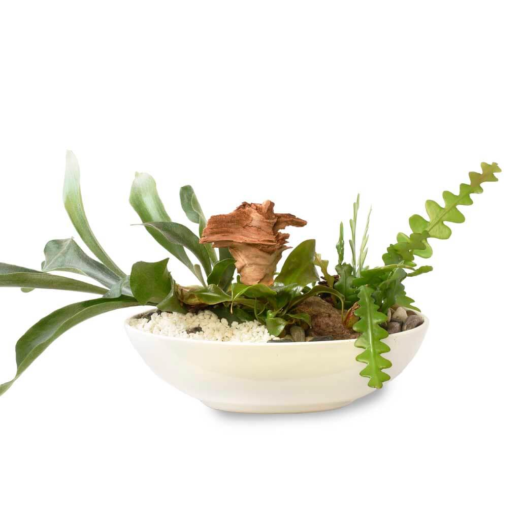 Tropical Indoor Plant Delivery Vancouver | Adele Rae Florist