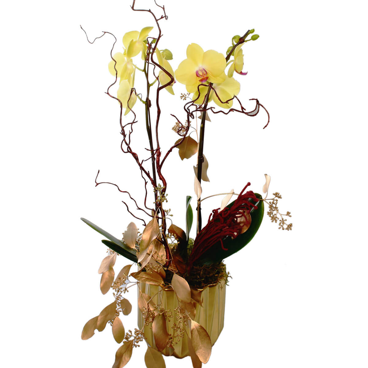 Vancouver Yellow Orchid Planter Delivery | Burnaby Florist Adele Rae