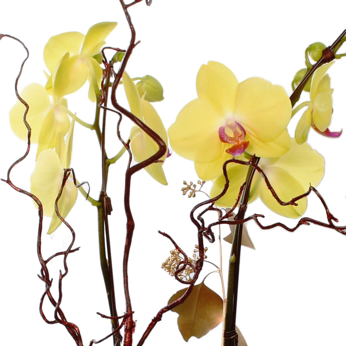Vancouver Chinese New Year Orchid planters | Burnaby Plants | Adele Rae