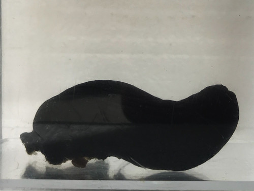 Black Sea Squirt
