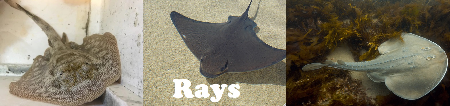 rays-for-site.jpg