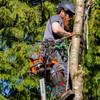 Ascend Gen2 Seasonal Men's Arborist Chainsaw Trousers