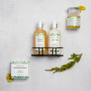 Woodland Timber -  The Gift of Luxury - Perfect House Warming Gift - Curated Gifts By DAYSPA Body Basics Basics Gift Box Made in USA