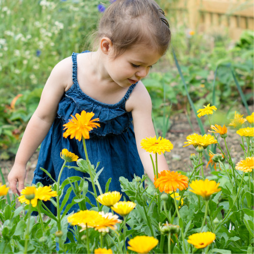Calming Calendula Butter = Natures Apothecary for Ultra-Sensitive Baby Skin