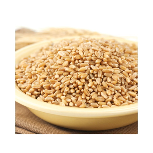 Prairie Gold (86) Kernels 25lb View Product Image