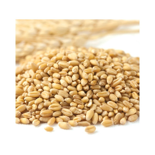 50lb Organic Prairie Gold Kernel