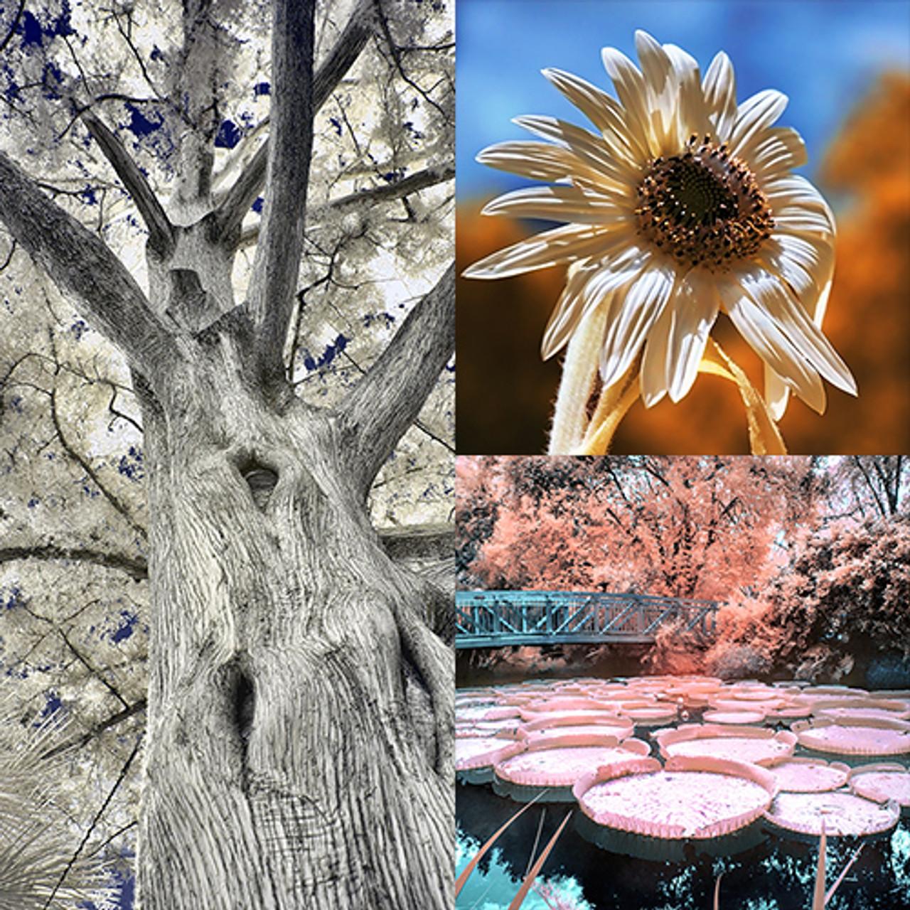 Flowers • Plants • Trees