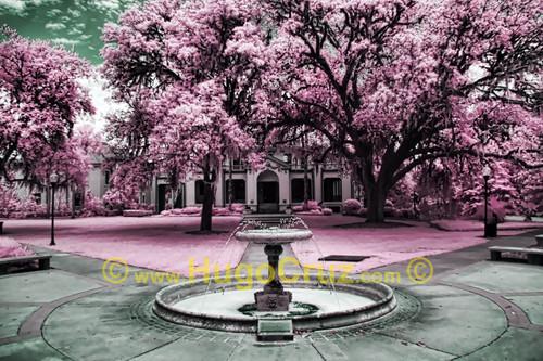Thomas Fountain