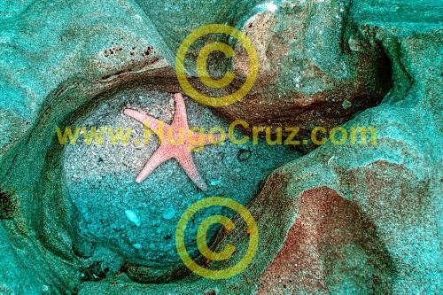 Coquina Star