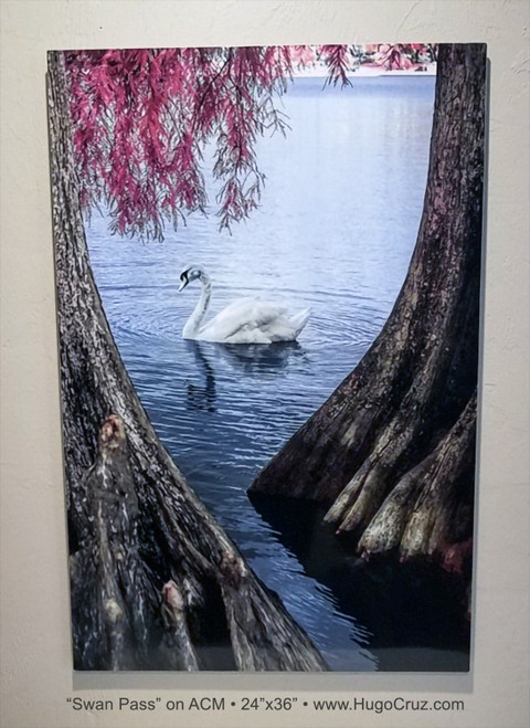 Swan Pass - 24x36 on ACM