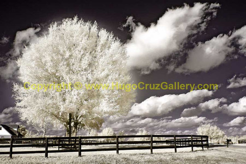 """""""Corralled"""" ● Infrared Photography"""