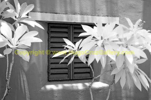 """La Ventana"" ● Infrared Photography"