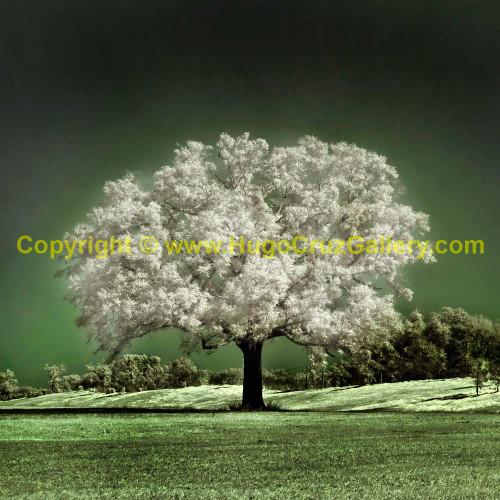 """""""Emerald Meadow (Square)"""""""
