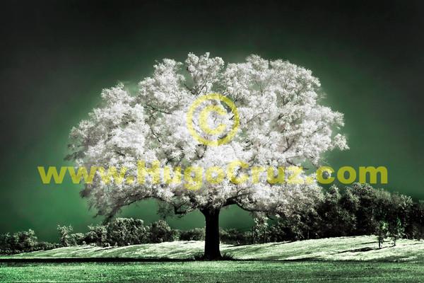 Emerald Meadow