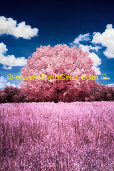 Pink Meadow