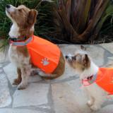 Pet Safety Vest