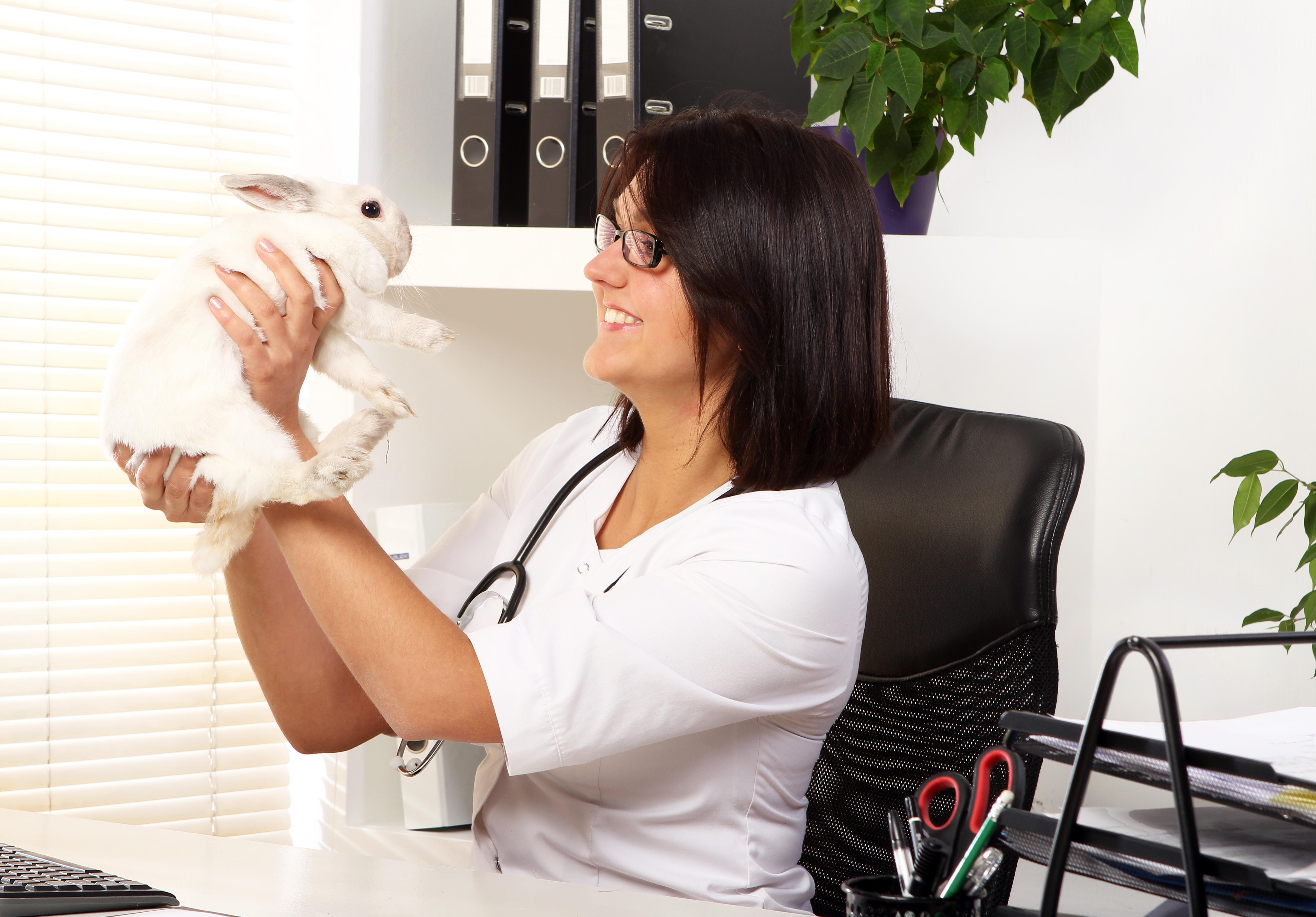 woman-veterinarian-is-checking-health-of-white-rab-vdxc6wf.jpg