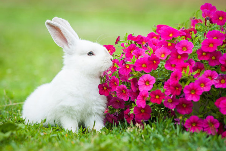 Canada to Go Cruelty-free with Cosmetic Animal Testing Ban!!!