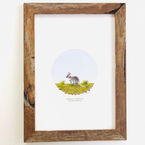 Bennett's Wallaby Archival A4 Print