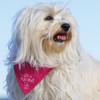 A444 Doggie Bandana