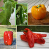 Annie's Organic Peppers Collection