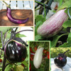 Annie's Favorite Eggplants Collection