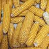 Tom Thumb Popcorn - Organic
