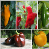 Annie's Favorite Peppers Collection
