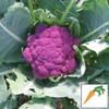 Violet of Sicily Cauliflower