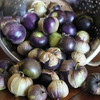 Purple Tomatillo - Organic