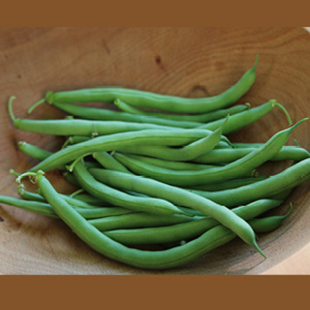 Blue Lake Bush Bean - Organic