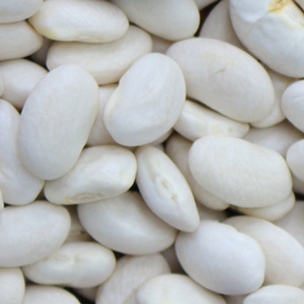 Great Northern Bush Bean