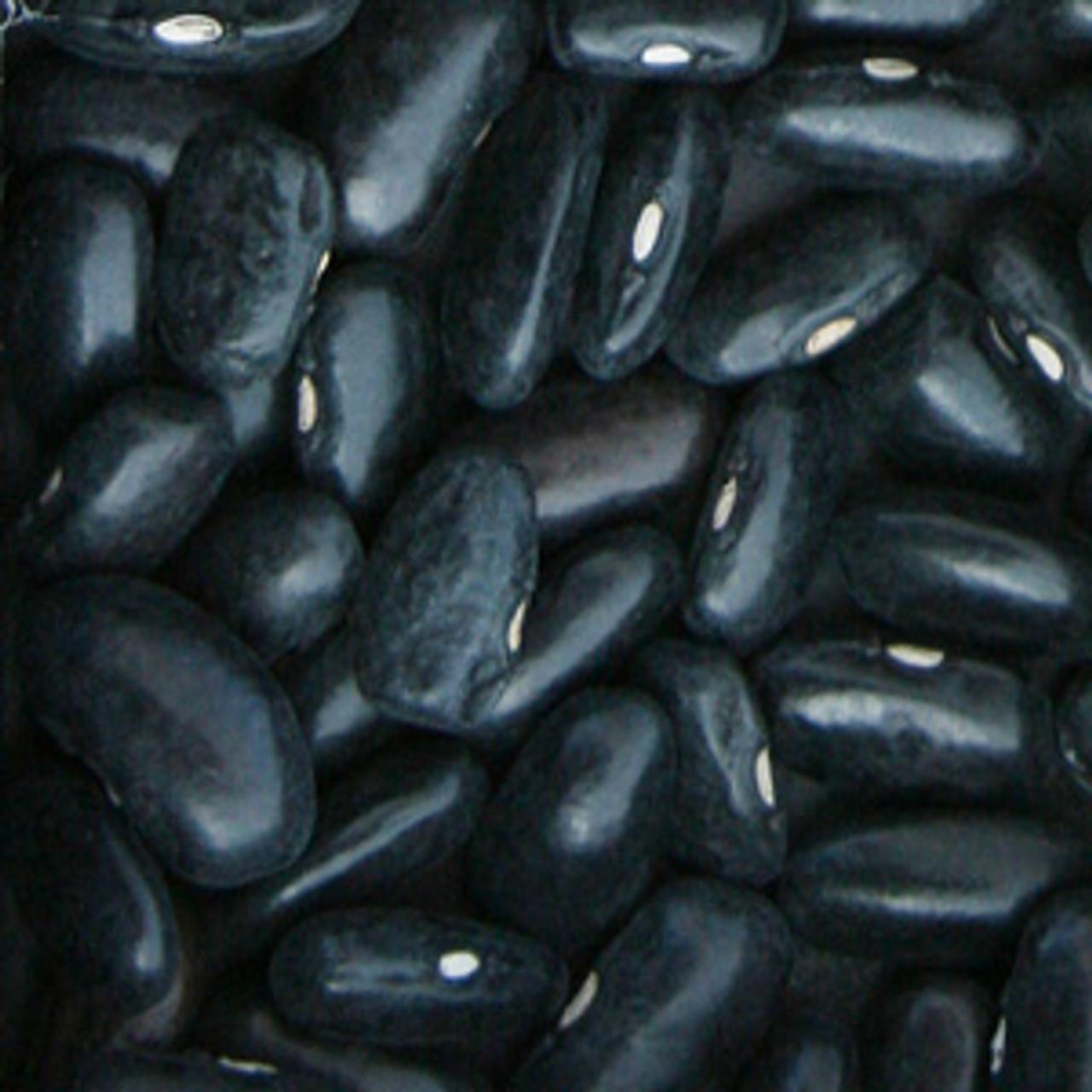 Cherokee Trail Of Tears Bean