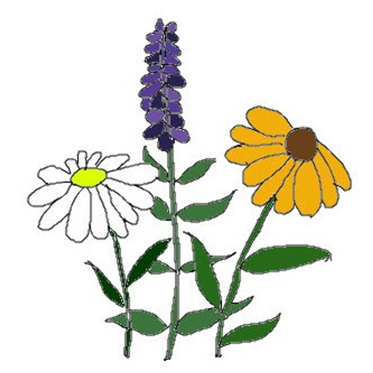 Wildflowers, Hummingbird and Butterfly Mix