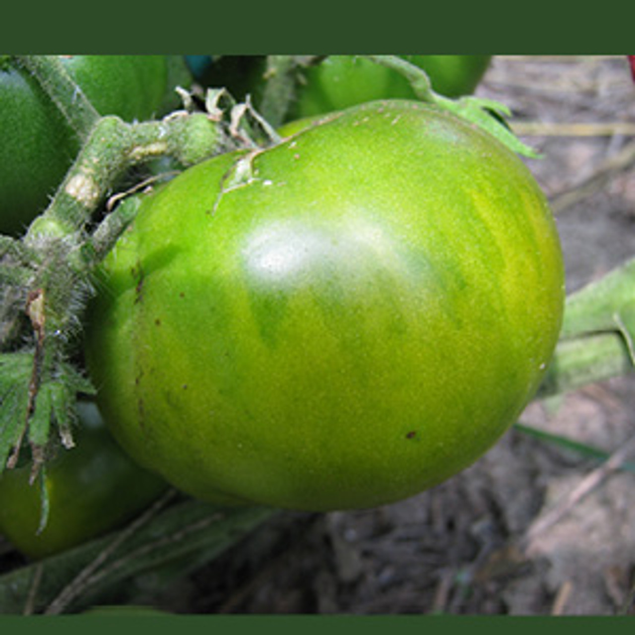 Aunt Ruby's Green Tomato