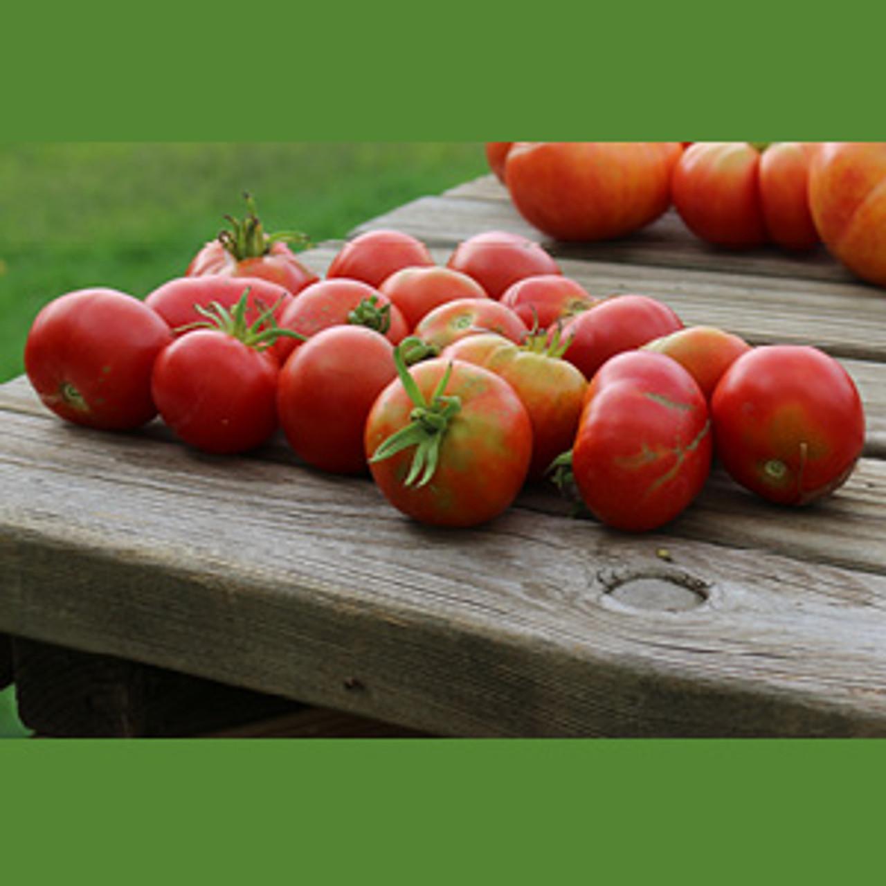 Bloody Butcher Tomato