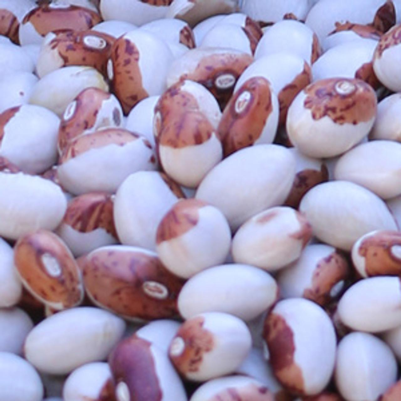 Hidatsa Shield Figure Bean