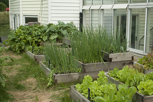 raised-beds-6-small.jpg