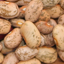 Pinto Bean Annie S Heirloom Seeds