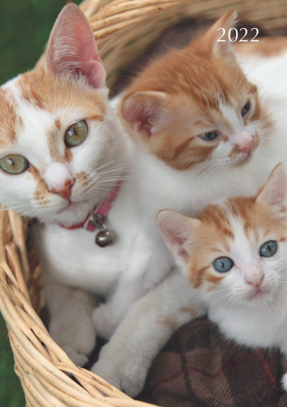 2022 A5 Padded Diary - Cats & Kittens