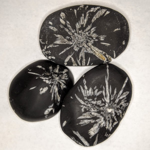 Chrysanthemum Palm Stone