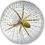 Cook Islands 2016 5$ Magnificent Life – WASP SPIDER Proof Silver Coin