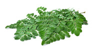 The Power Of The Moringa Tree For Your Health