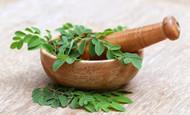Best Moringa Powder Is Gaining In Popularity