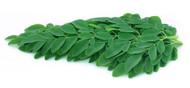 How to Prepare Pure Moringa Leaf Extract