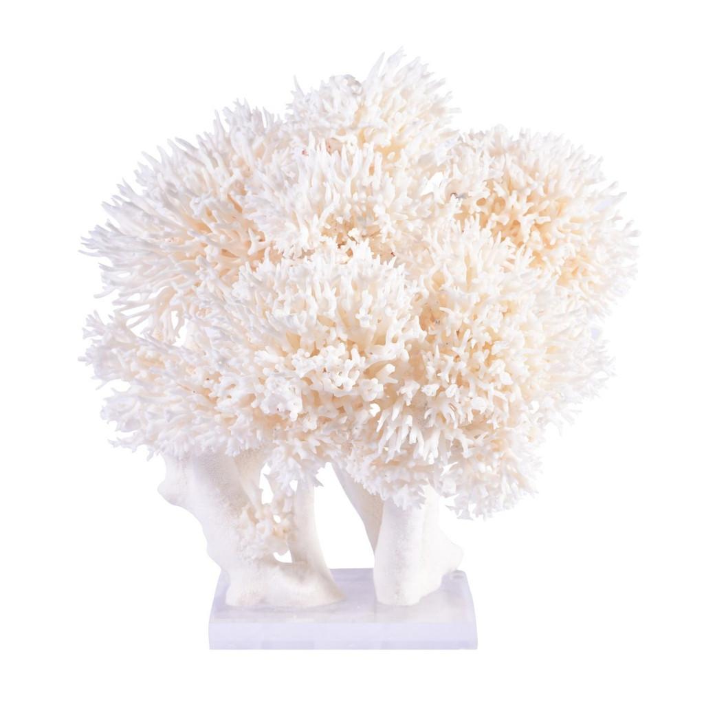 Birdsnest Coral Creation On Acrylic Base