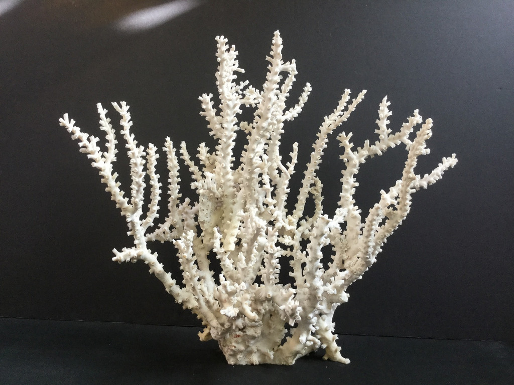 Octopus Coral Creation On Acrylic Base