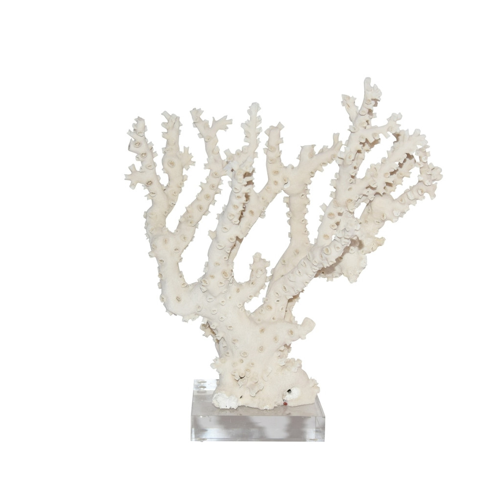 Octopus Coral 12-15 Inch On Acrylic Base